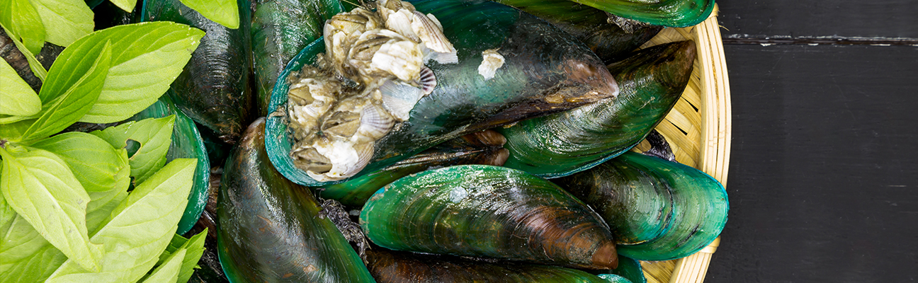 The Superfood in Now Fresh - Green Lipped Mussels from New Zealand