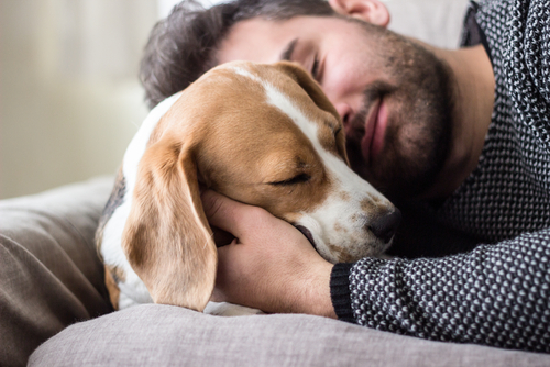 Good Science: 7 Ways dogs make humans healthier and happier!