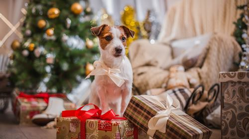 Tips for making your pets' Christmas special