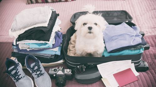 TIPS FOR LONG DISTANCE TRAVEL WITH YOUR DOG!