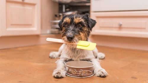 A comprehensive guide to baking homemade dog treats.