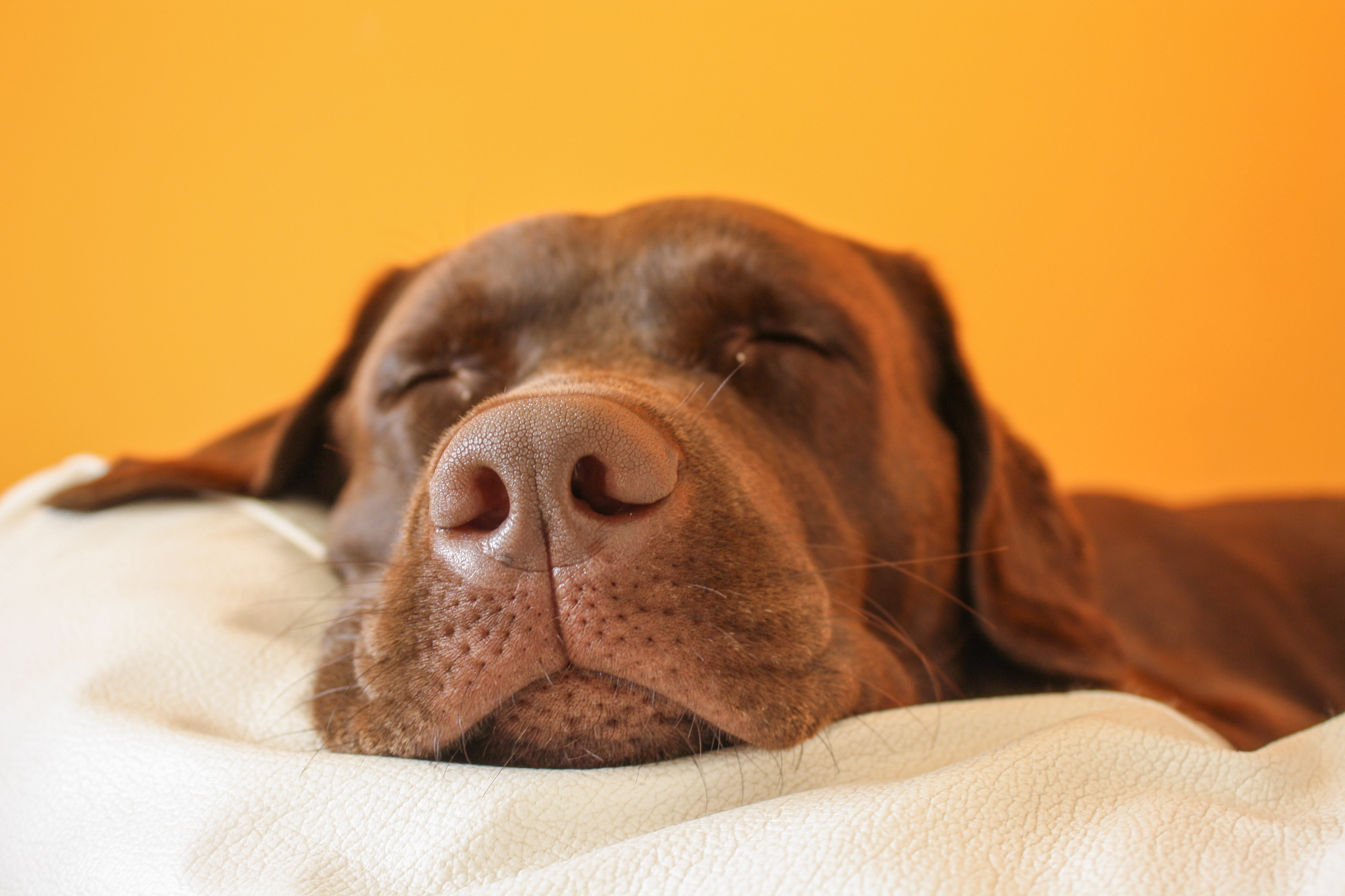 How Your Dog Sleeps and What It Means