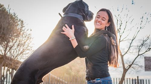 Five Conditions Your Large Breed Dog Is Extremely Prone To